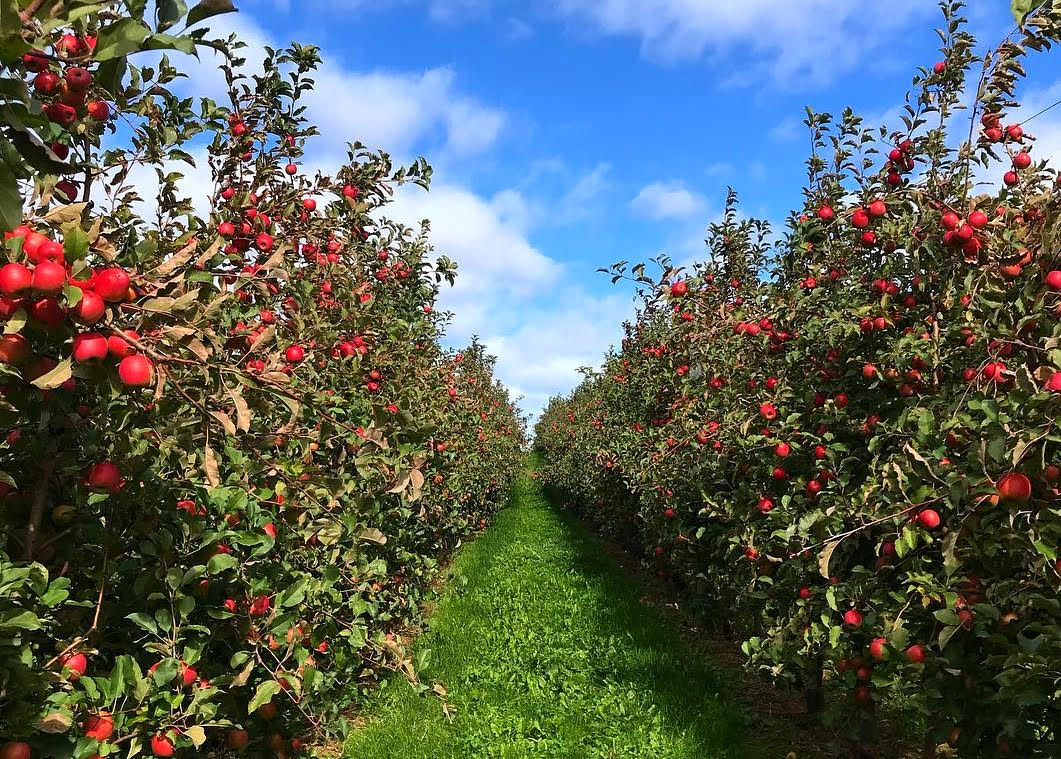Dutchess Apple Picking & Corn Maze Adventure via Direct Bus from NYCimage
