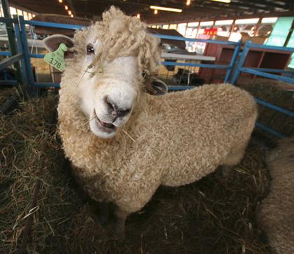 NYS Sheep & Wool Family Festivalimage