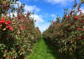 Apple and Pumpkin Picking Dutchess County