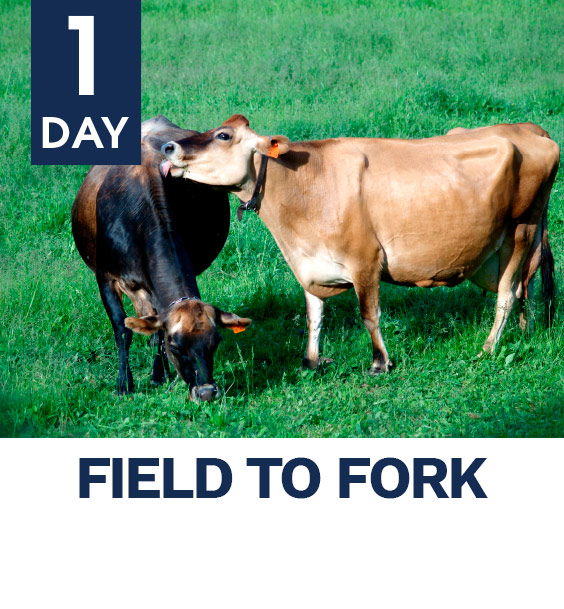 1day_fielt_to_fork_image