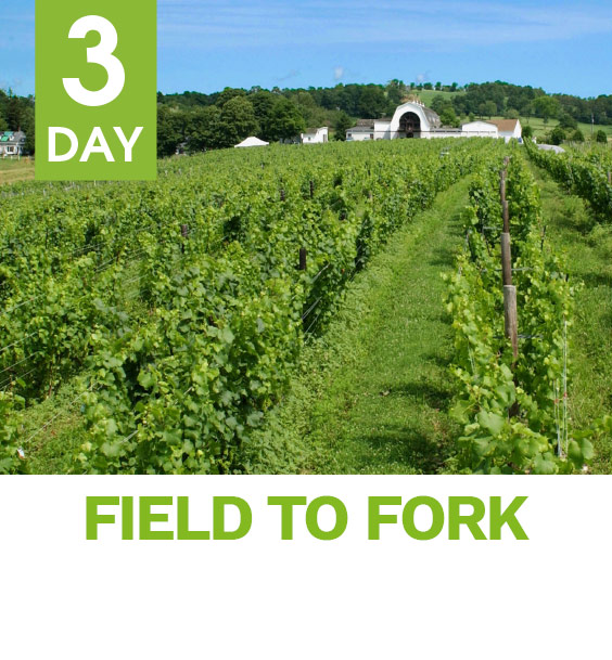 3day_field_to_fork_image