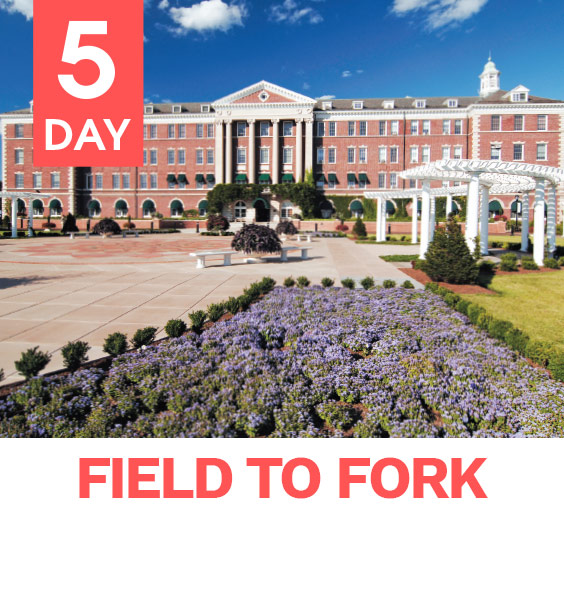 field_to_fork_image